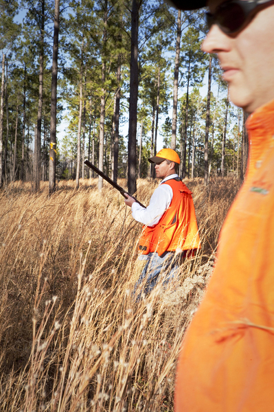 Quail Hunt - Willowin Plantation, Georgia